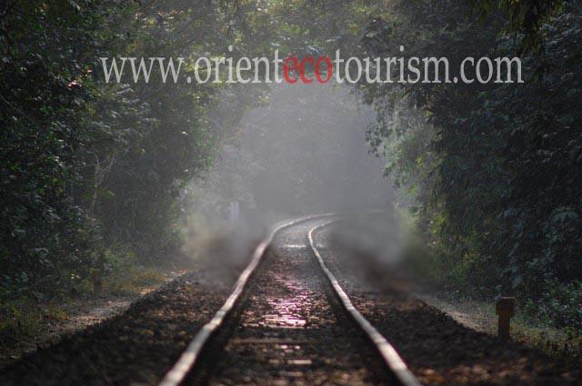 Srimangal tour, lawachara