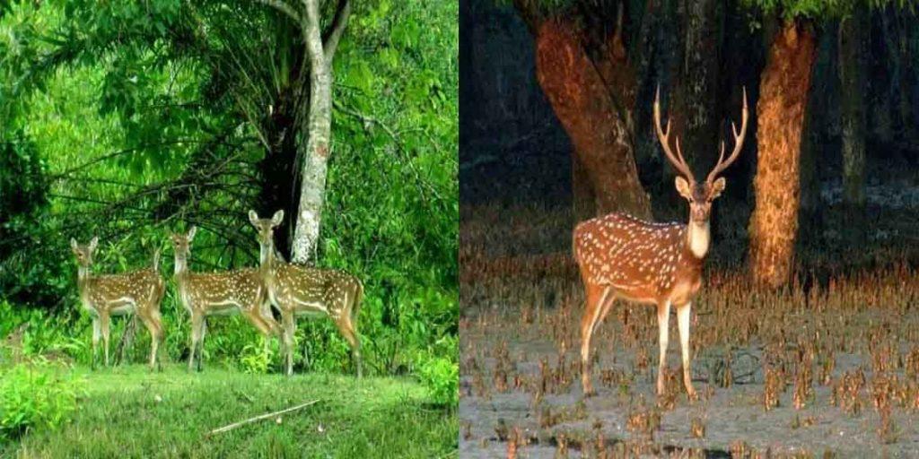 Sundarban tour from Dhaka