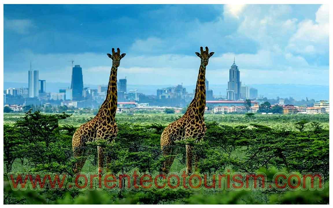 city tour in Kenya